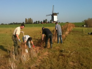 verplanten van maasheggen in batenburg